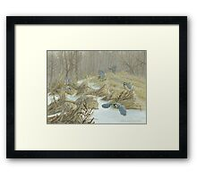 Spring on the way - Great Tits in motion Framed Print