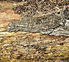 Gator on the log!! by Susana Weber