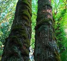 Two Trees by Jessica Grunewald