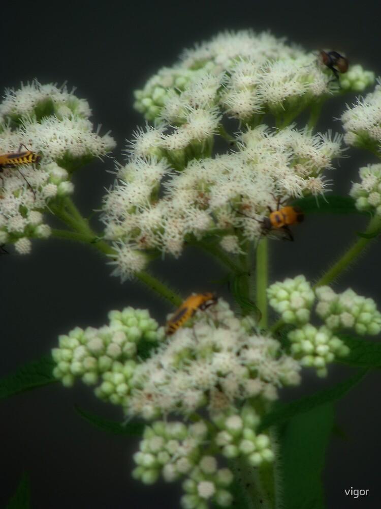 The Gathering Flower by vigor
