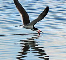 Skimmer  skimming(x) by jozi1