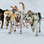 Dog Sledding by Vanessa Truter