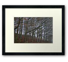 The sleeping trees of Winter Framed Print