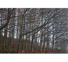 The sleeping trees of Winter Photographic Print