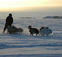 Dog Sledding by Vanessa Truter