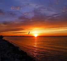 Sunrise on the Courtney Campbell Causeway by hixpix