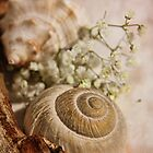 Nature Table - For Polly:-) by Julesrules
