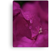 7 ★★★★★ . Don't Cry for me Bougainvillea . Tribute to Guns N' Roses - Don't Cry . by Brown Sugar. Favorites: 2 Views: 437 . thanks !) . Canvas Print