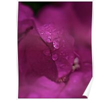 7 ★★★★★ . Don't Cry for me Bougainvillea . Tribute to Guns N' Roses - Don't Cry . by Brown Sugar. Favorites: 2 Views: 437 . thanks !) . Poster