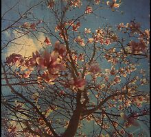 Candyfloss by Jill Auville
