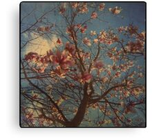 Candyfloss Canvas Print