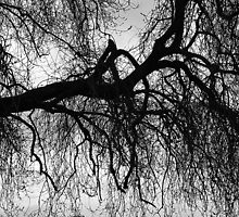 Under The Winter Willow by relayer51