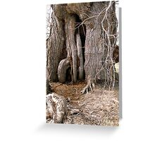 Old Willow Tree, on the banks of the Rideu River, Ottawa, Ontario Greeting Card