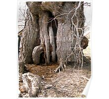 Old Willow Tree, on the banks of the Rideu River, Ottawa, Ontario Poster