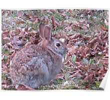 """Welsh """"Hare""""bit or Happy Easter! Poster"""