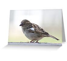 Sweet little female house sparrow Greeting Card