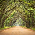 Botany Bay Road - Edisto Island, SC by Dave Allen