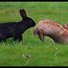 Bunnies by AngieBanta