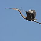 Blue Heron by Karl R. Martin