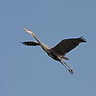 Blue Heron by Karl R. Martin