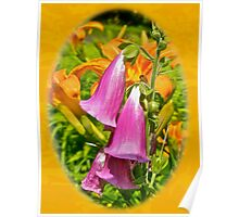 Foxgloves and Daylilies Poster