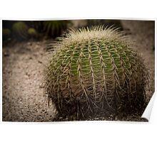 Green Desert - Rockhampton Botanic Gardens Poster