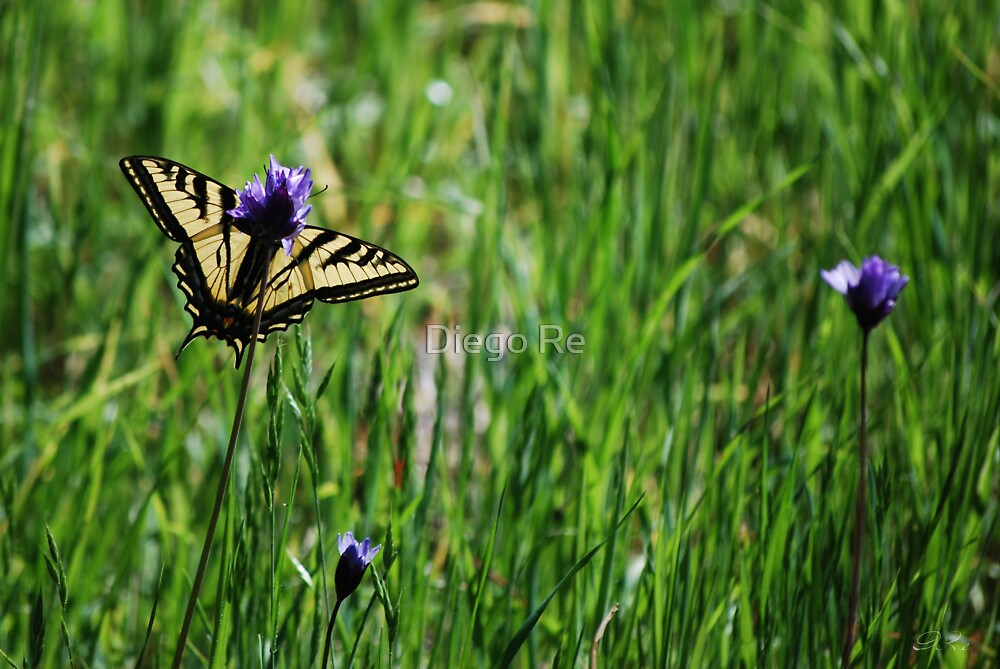 Tiger Swallowtail Butterfly by Diego Re