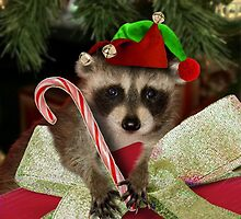 Christmas Elf Raccoon by jkartlife