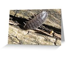 Dynamic woodlouse Greeting Card
