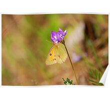 the yellow butterfly with dot Poster