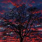 Lake Oswego Sunset by Nick Boren
