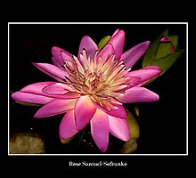 Pink Waterlily by Rose Santuci-Sofranko