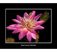 Pink Waterlily Photographic Print