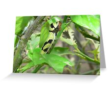 Butterfly Larvae Greeting Card