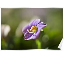 Purple flower with yellow stamen Poster