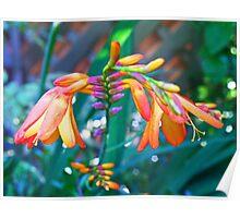 Colour cascade Poster