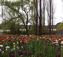 Tulips by the Lake by 3Cavaliers