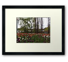 Tulips by the Lake Framed Print