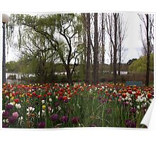 Tulips by the Lake Poster