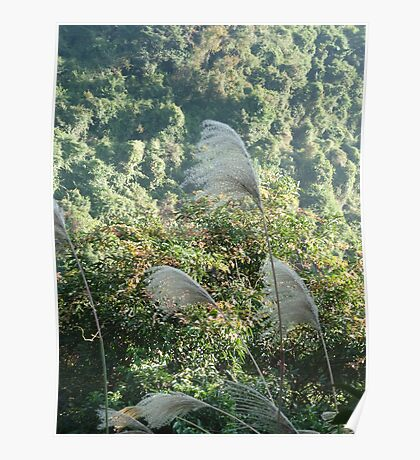 white reeds dancing in the wind on the side of a jungle mountain Poster
