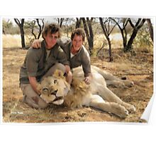 """Relocation"" - male lion - Kalahari Poster"