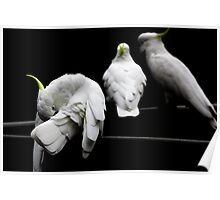 Cockatoo Party Poster