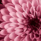 Pink Chrystal by Gavin King