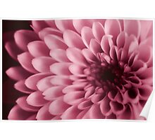 Pink Chrystal Poster