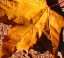 Fallen Maple Leaf Sticker