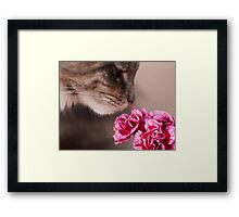 Curiosity - Maine Coon cat and flower Framed Print