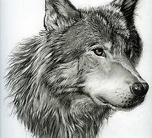 Wild Wolf. Graphite. by jan farthing