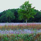 A Field of Dreams by zpawpaw