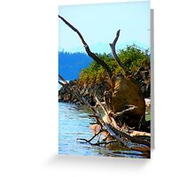 Northwest Roots  Greeting Card