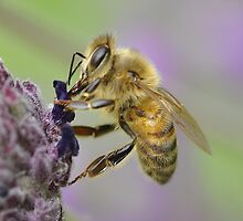 Bee-lated Birthday Card by Imserendipity